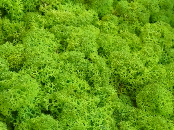 Mech Chrobotek Reniferowy 2spring Green 5 Kg