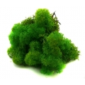 MECH Chrobotek Reniferowy 17.Light Green Grass 5 kg